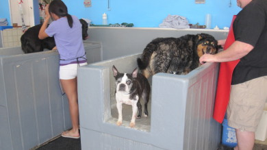Some two-legged customers bonding with their four-legged friends enjoying bath time!