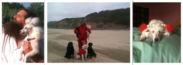 Owner, Ronnie, with his pack of poodles!