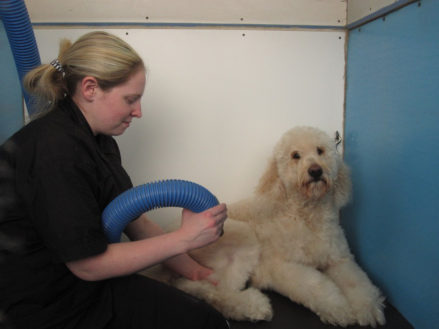 Do it yourself doggie detail grooming gland expression more high power dryers solutioingenieria Images